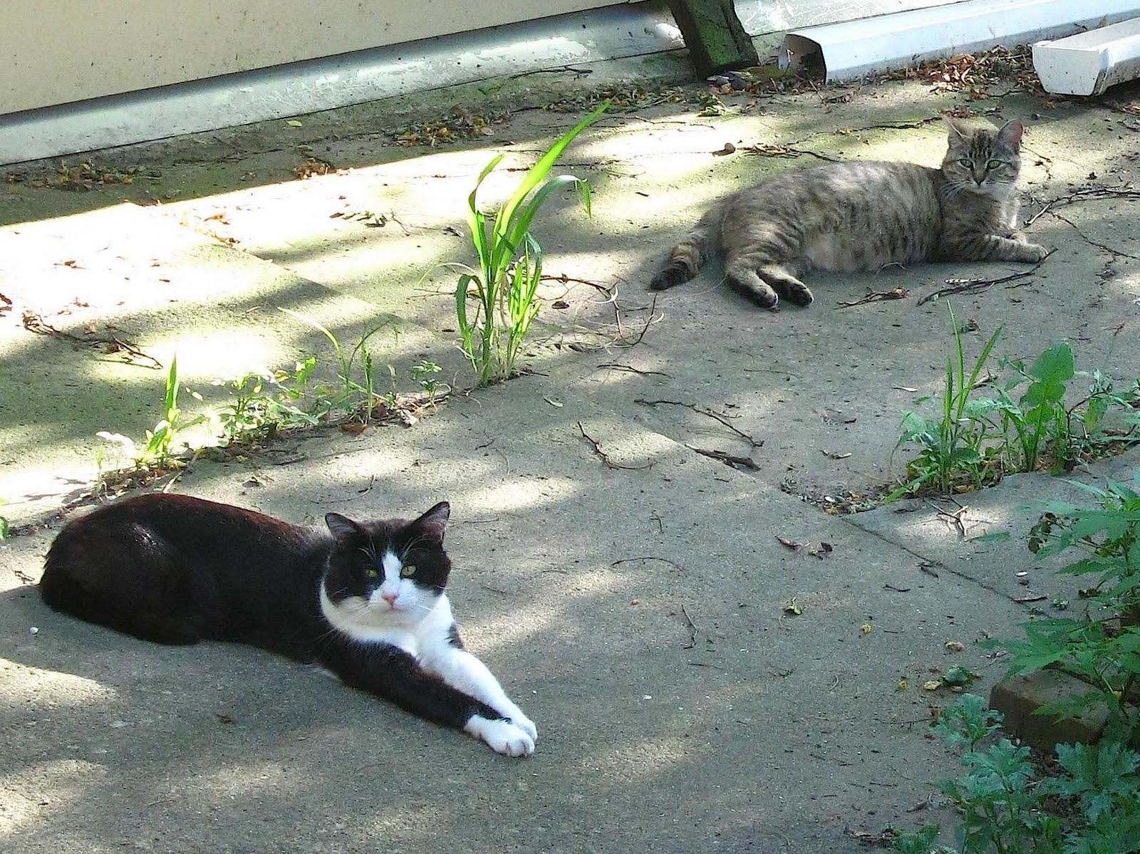 It soon became evident that Dido was pregnant. Uh oh. One pregnant cat leads ...