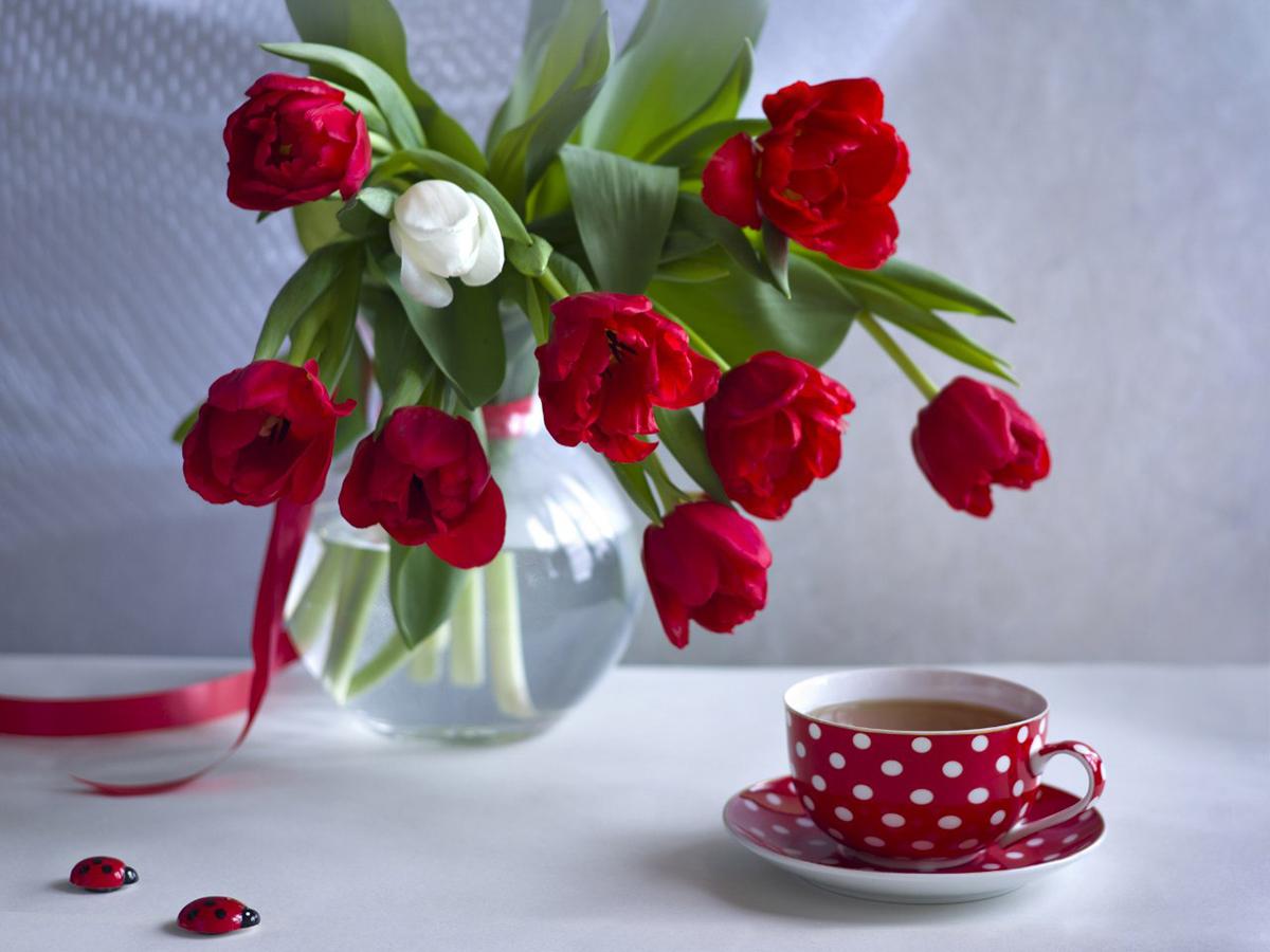 Желтова, фотошкола, Солотин, тюлпаны, чай