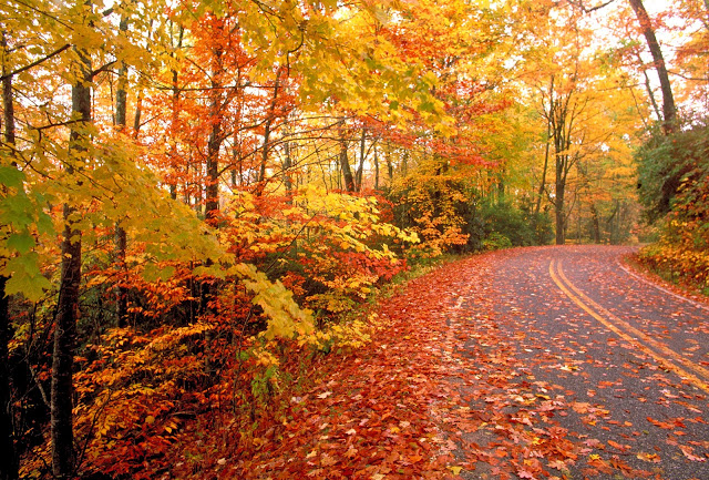 Autumn Attractions & Fall Foliage