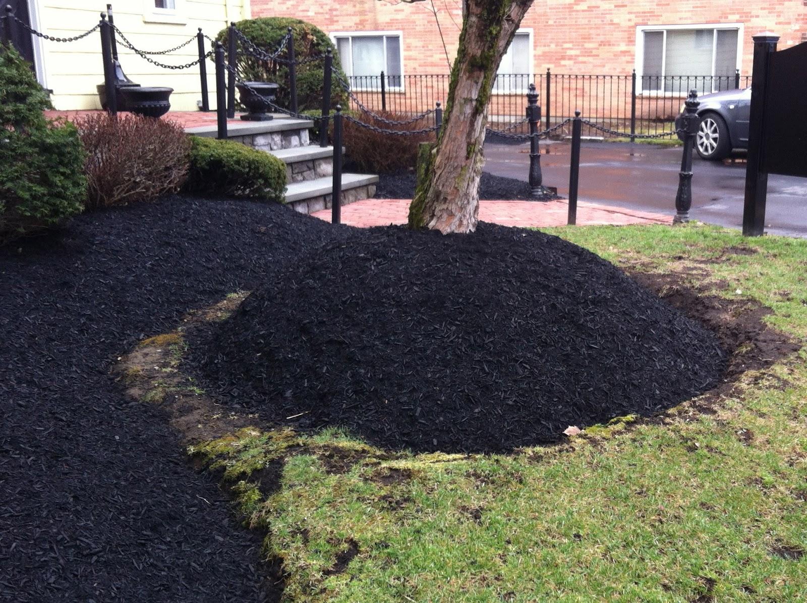 Reed39s Garden Ramblings Reed Versus The Volcano Tree Volcano