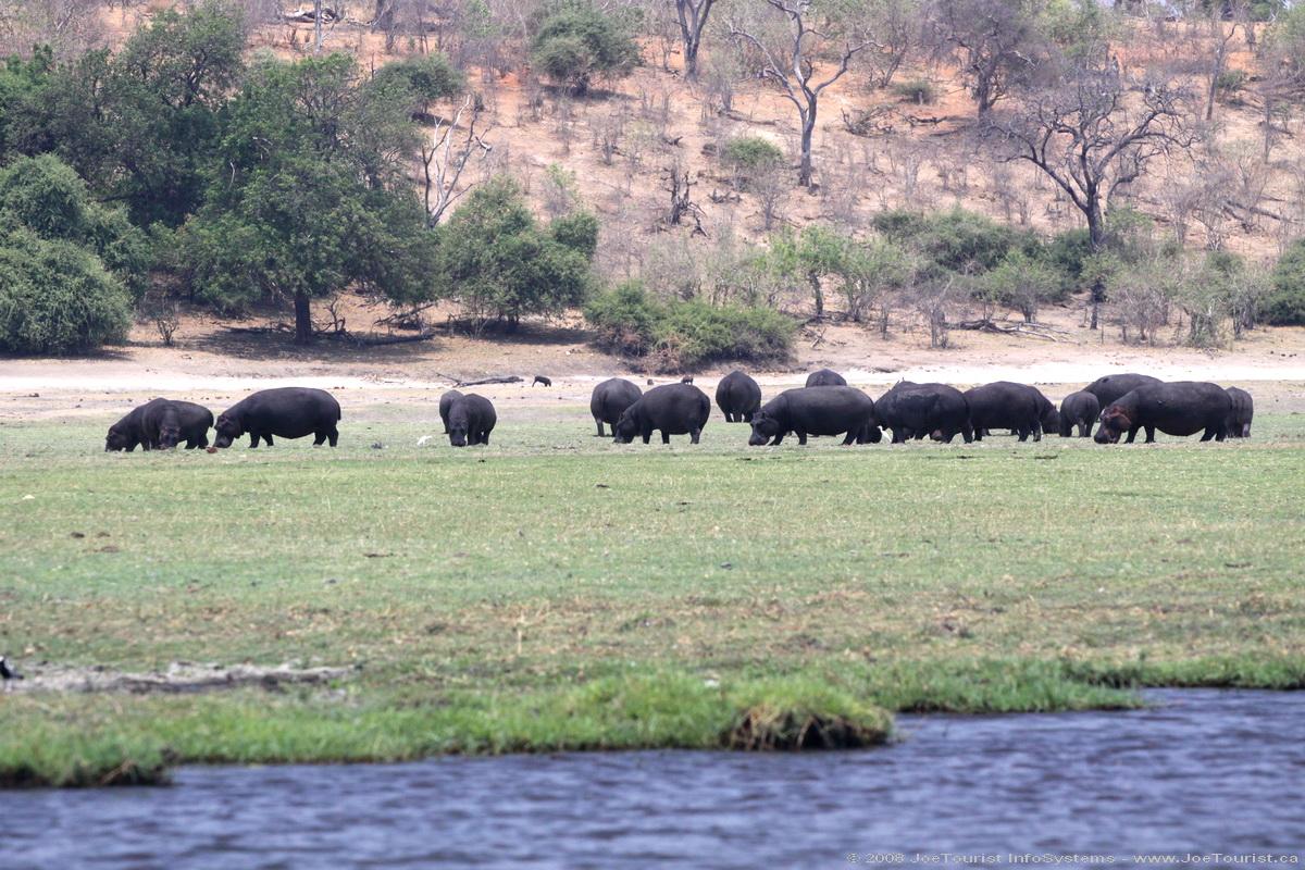 Hippopotamus  Films TV Shows and Wildlife Wiki  FANDOM