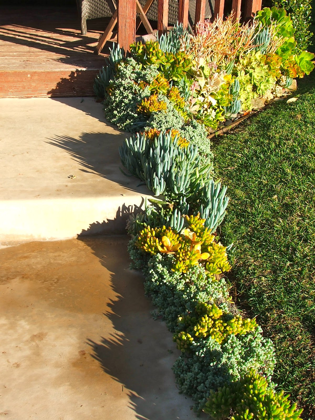 Garden and Bliss: Water Wise Succulent Gardens