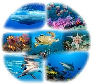manual de consulta didactico con rigor cientifico sobre biología marina