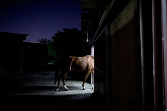 Một con ngựa được các bác sỹ đưa đi điều trị khi trời đã chuyển dần sang màu đen.