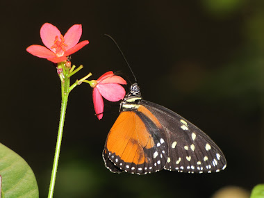 Orange and Black Butterfly on Flower