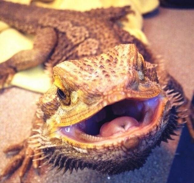 Iguana Pictures