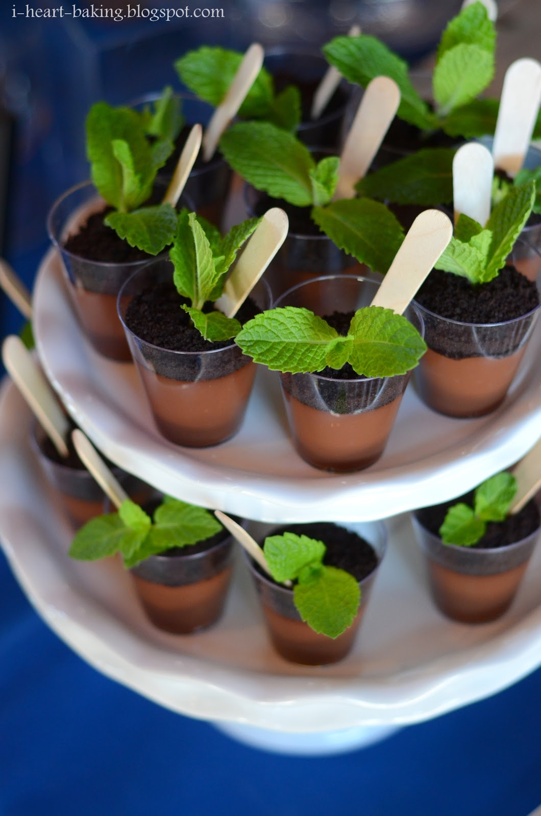 mint chocolate pudding cake potted chocolate mint puddings mint ...
