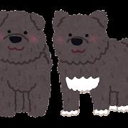 樺太犬のイラスト「タロとジロ」