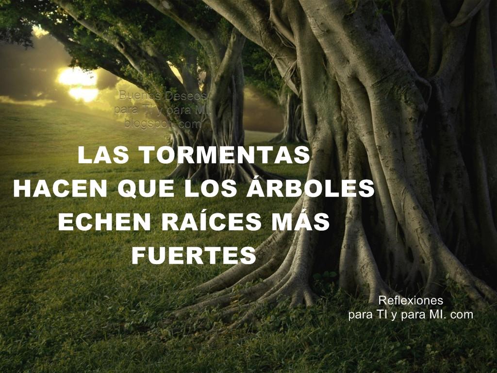 Reflexiones para ti y para m las tormentas hacen que for Cuales son los arboles perennes