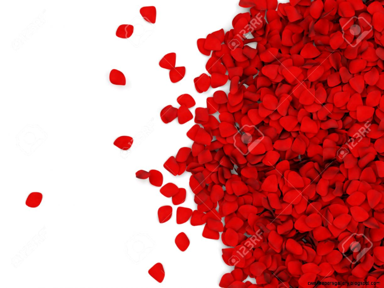 Heap Of Red Rose Petals Isolated On White Background With Place