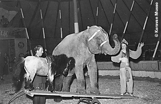sirkus sariola