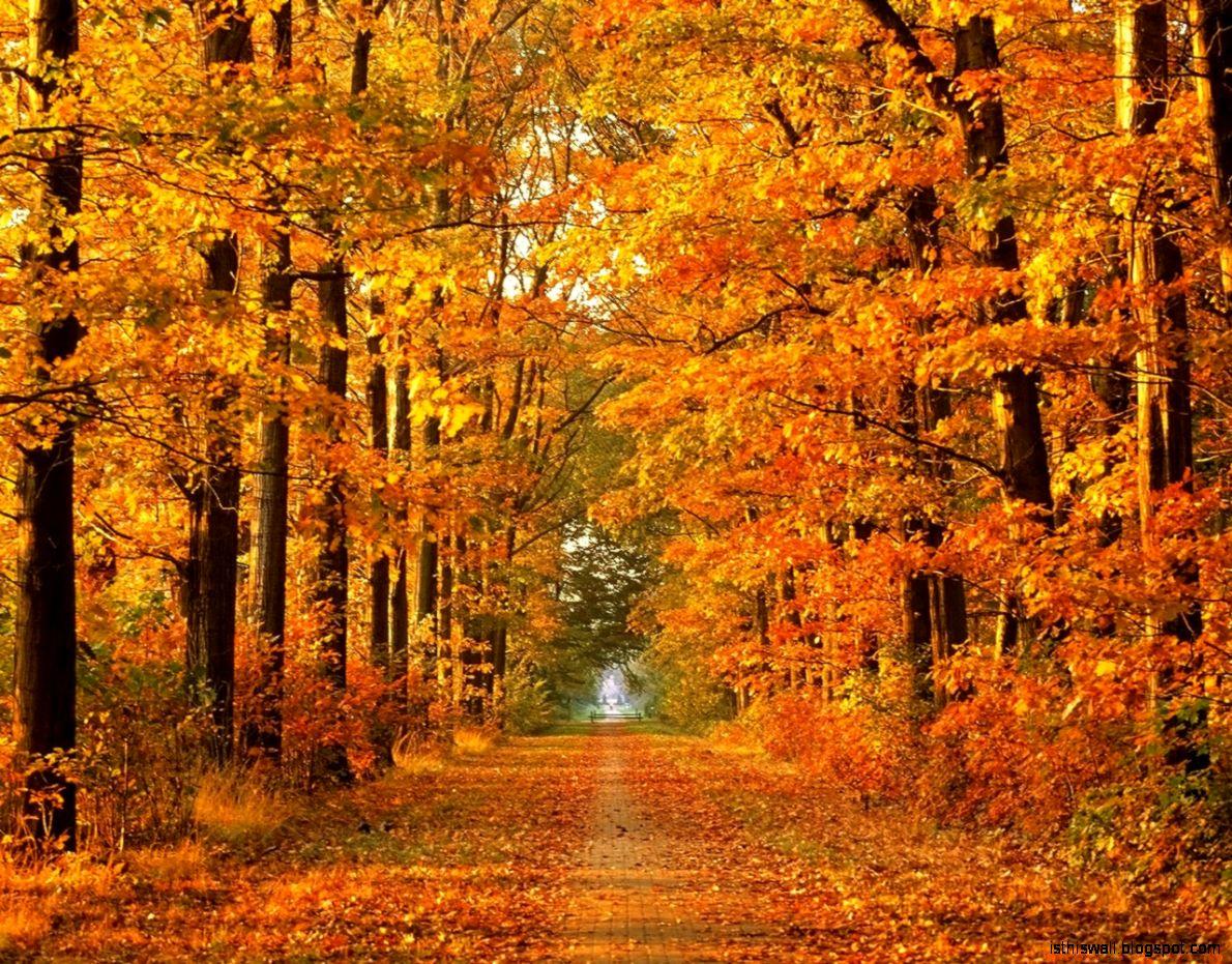 Fall Trees Wallpaper   365 funny pics