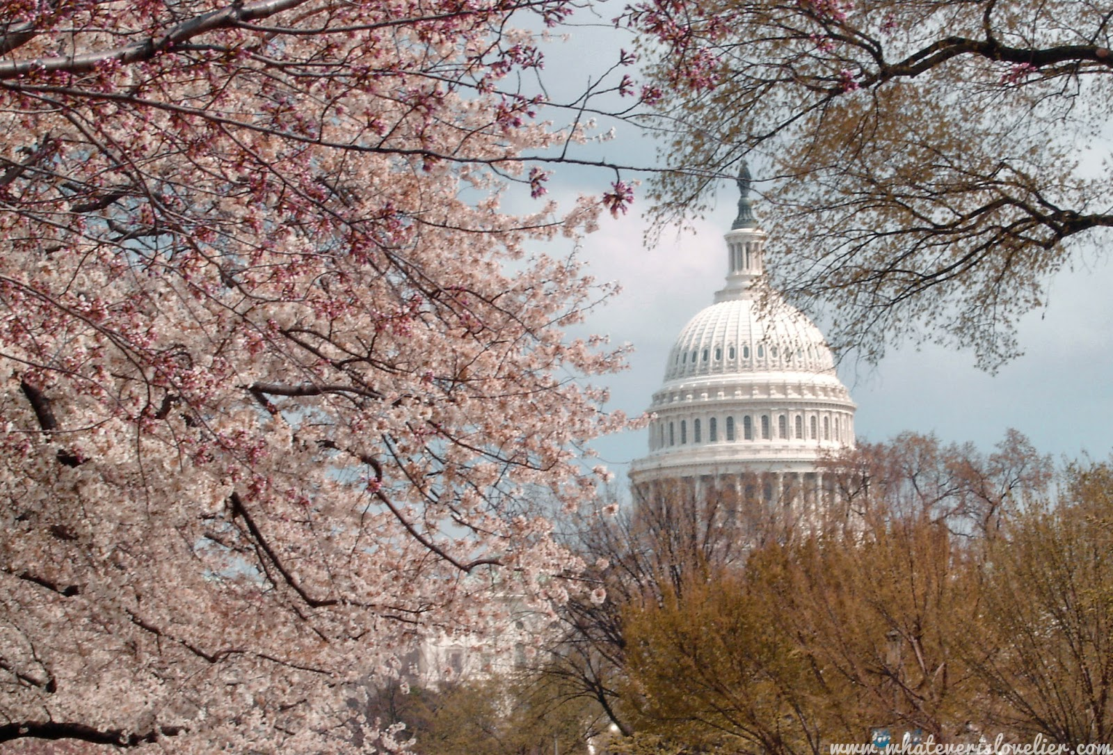 Travel Tuesday: Chasing Cherry Blossoms in Washington DC