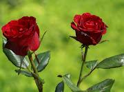 Compartir flores es compartir alegría !! sobretodo si son rosas