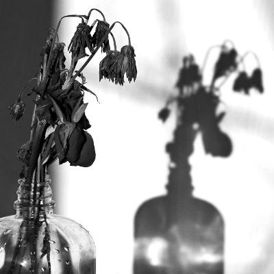 Indtørrede, visne blomster