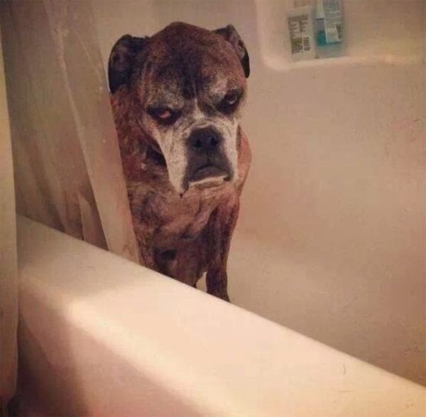 Adorable cats and dogs who really hate bath time (40 pics), funny pet pictures, dogs hate baths pictures