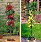 tanaman buah dalam pot, tanaman hias dalam pot, tanaman sayuran dalam pot, tanaman dalam pot, tanaman bunga dalam pot;