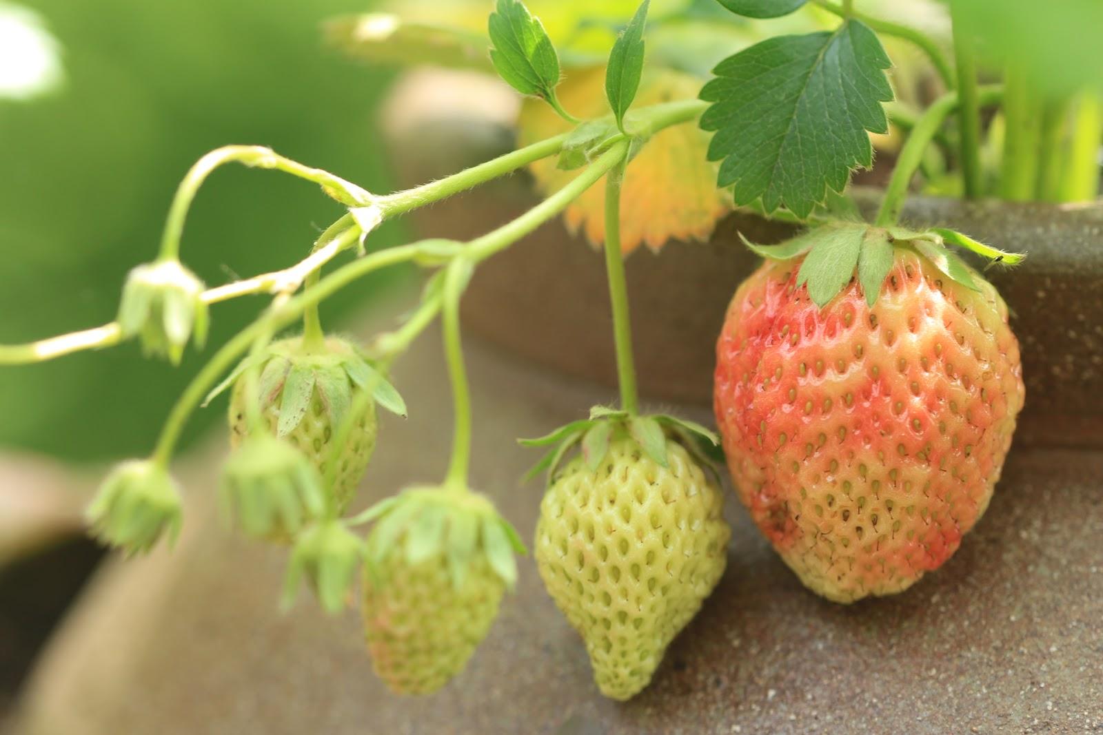 fruit egeltjes maken