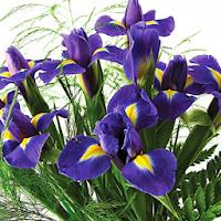 Classic Blue Iris Bouquet
