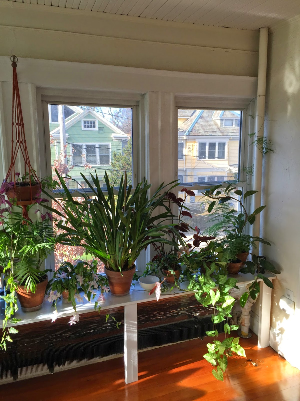 the indoor garden