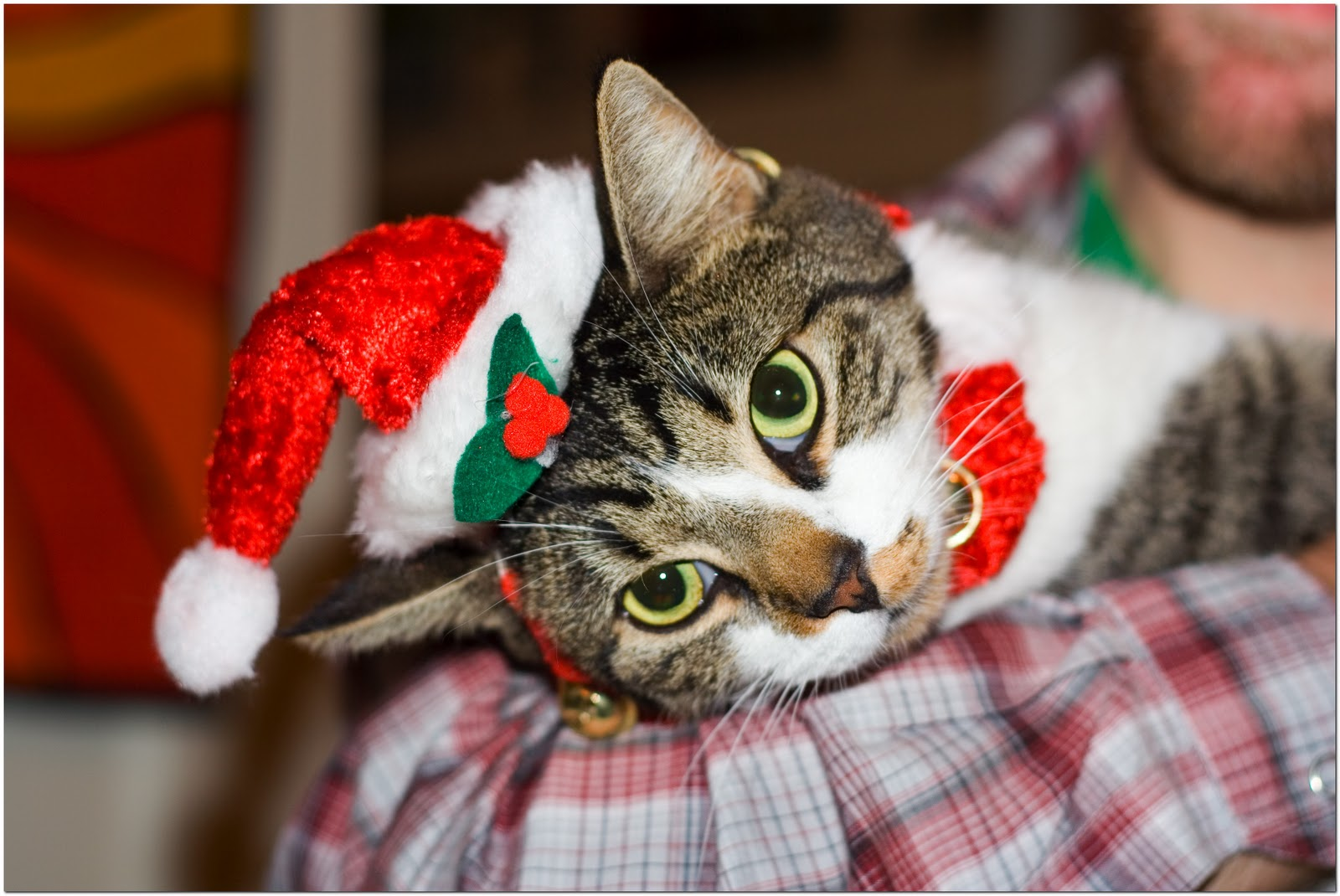 Funny Image Collection: Christmas Cat Christmas ...