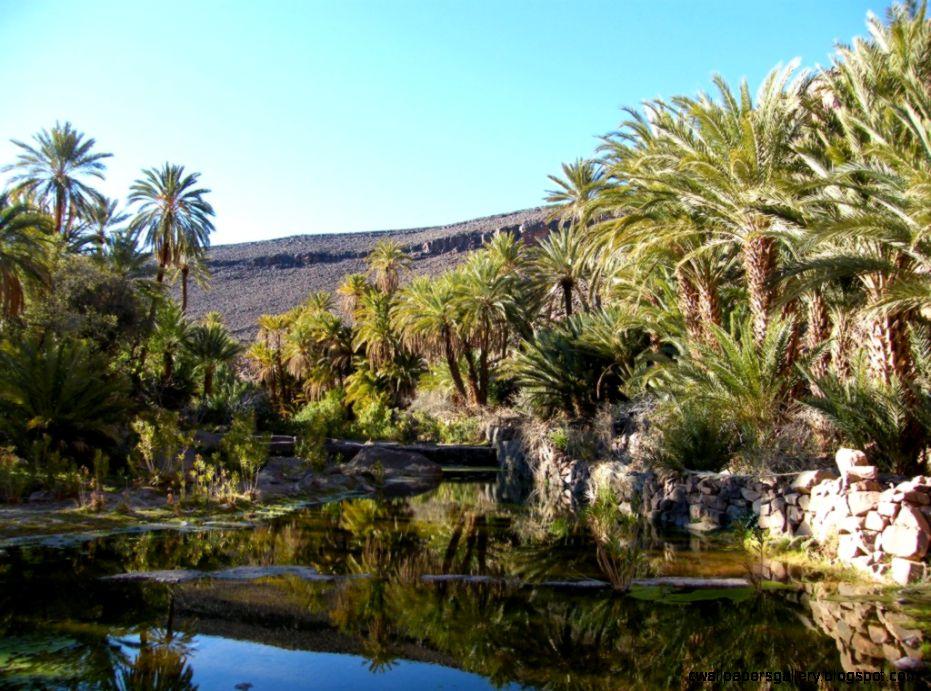 The Gateway to the Sahara Desert  The Leidener