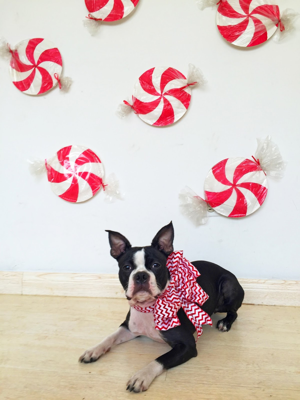 Homemade Christmas photobooth that is both cheap and cute! Click through for step by step tutorial