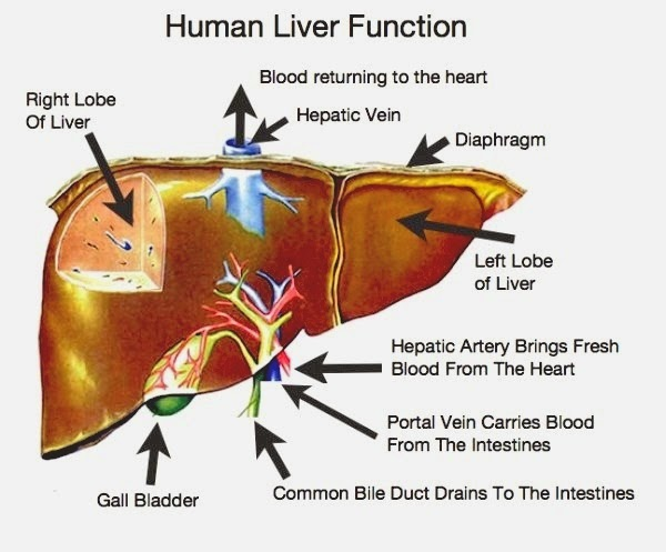Hepatitis Homeopathy Specialty Treatment Center Liver