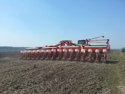 Drilling sunflowers