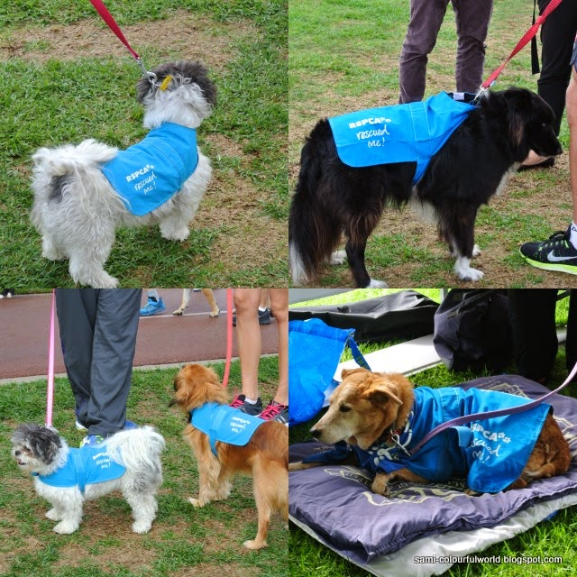 million paws walk - photo #33