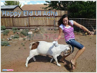 goat beating girl funny 2013 wallpaper