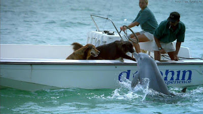 bacio-cane-delfino