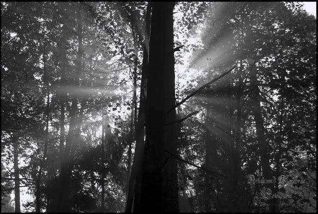 Sonnenstrahlen im Nebelwald