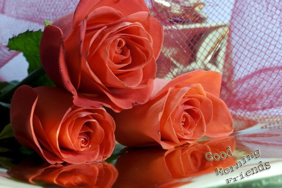 good morning with light red orange rose