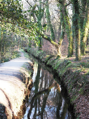 Water in a leat in Luxulyan Valley, Cornwall