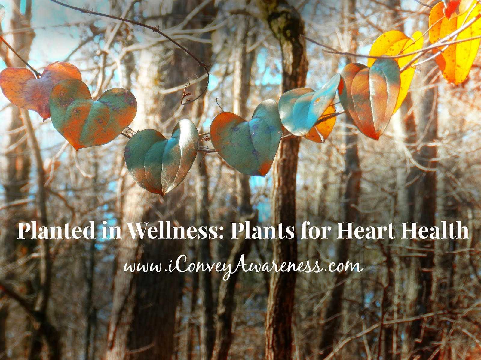 iConveyAwareness | Planted in Wellness: Plants for Heart Health (cover)