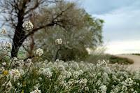Blanca primavera.