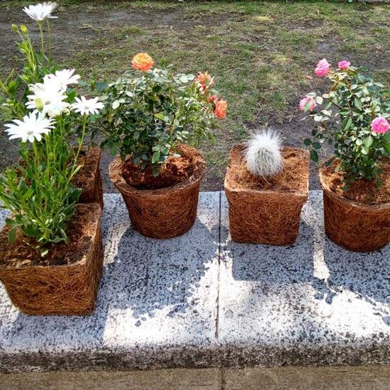 podio: e-ma orgánicos: macetas ecológicas