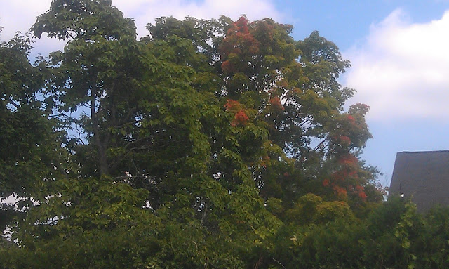 Fall starting to show in trees