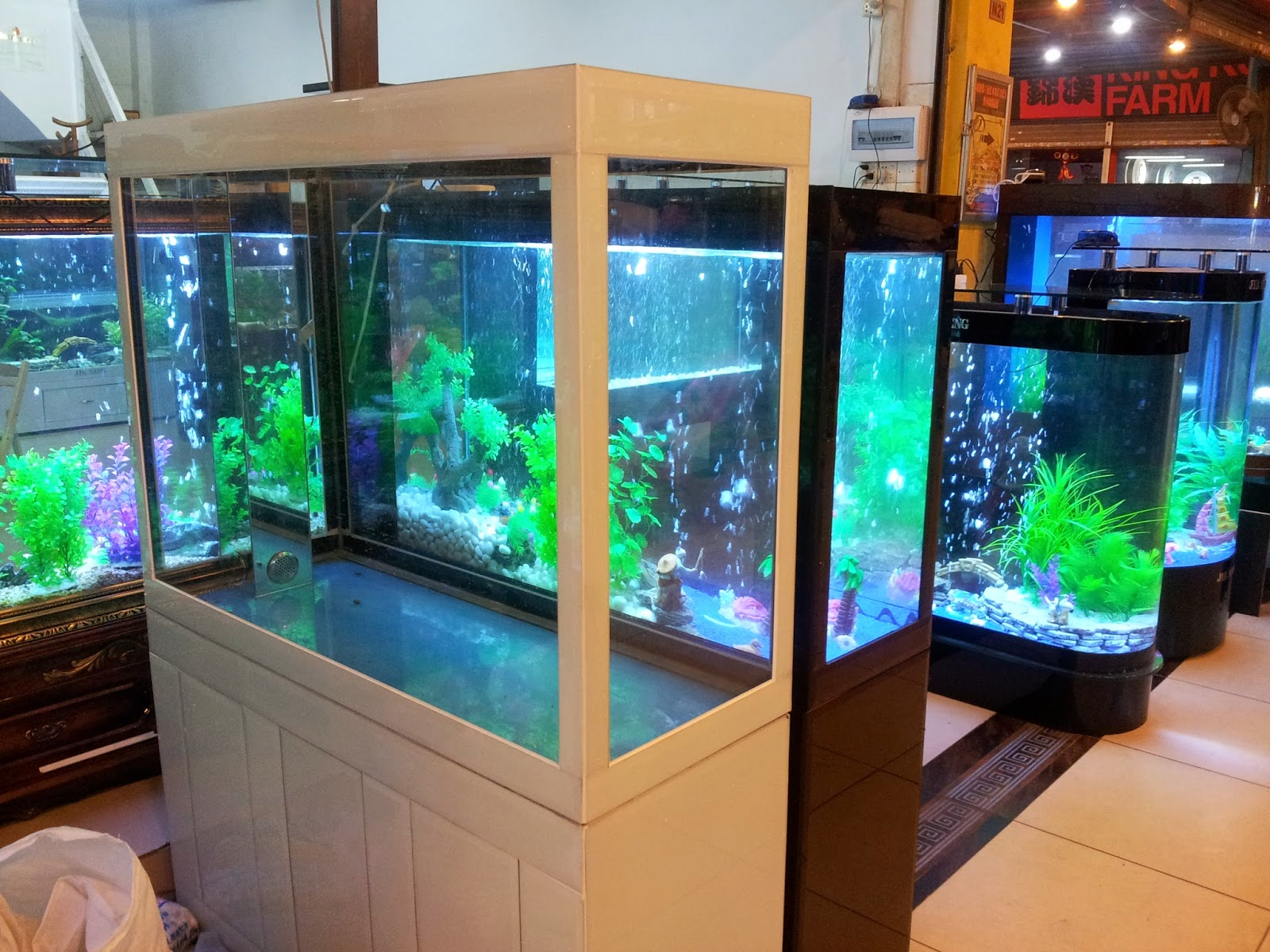 Mundo acuario el acuario y su ubicaci n - Decoracion para acuarios ...