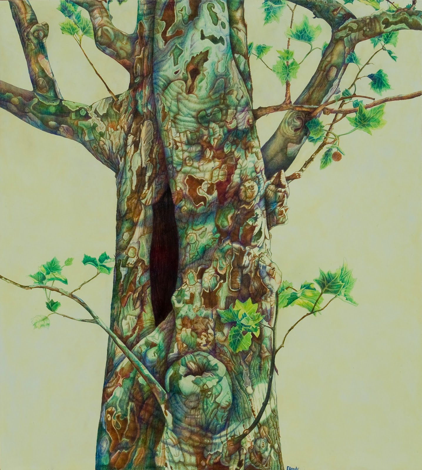 The Creative-Native Project: For Tree Lovers Like Me