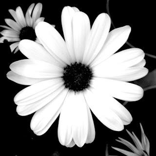 bilder schwarz weiß