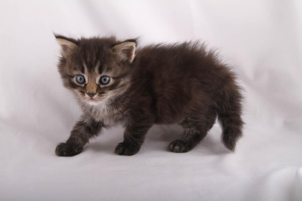 kitten new hampshire