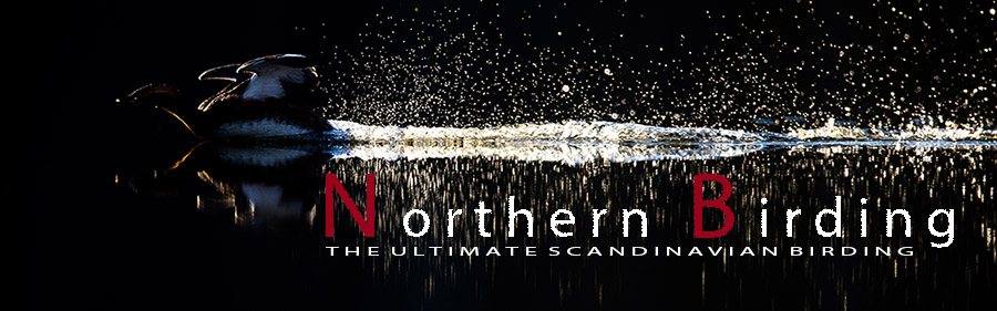 Northern Birding - the ultimate scandinavian birding