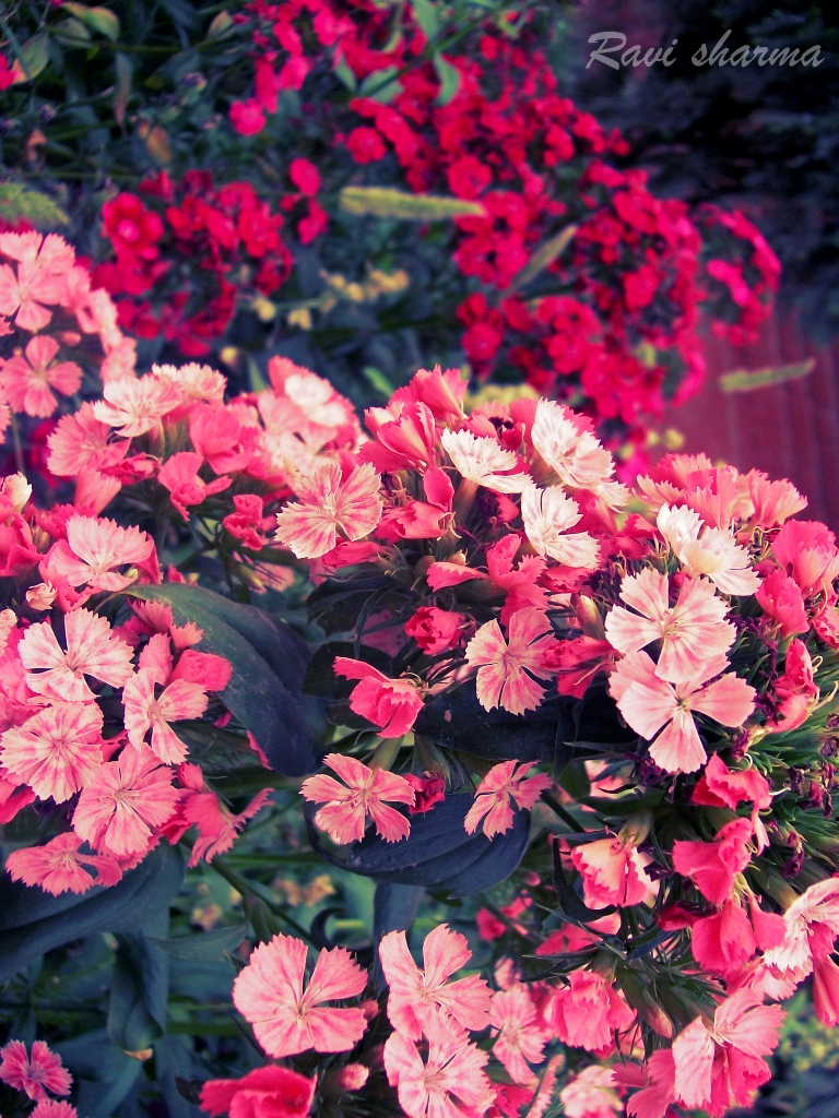 Some beautiful flowers Photography