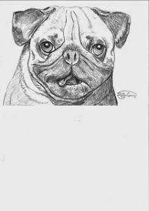 Pug tongue picture