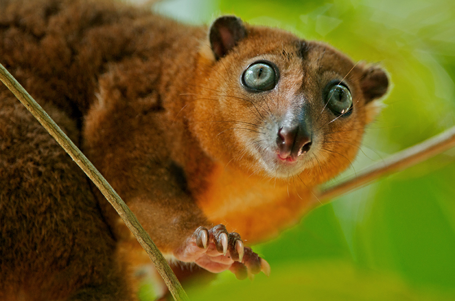 animal unique cuscus