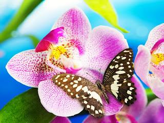 Mariposa sobre orquidea