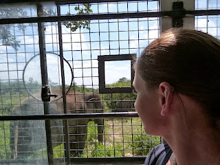Watching elephants from a safe place