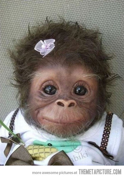 funny cute monkey girl